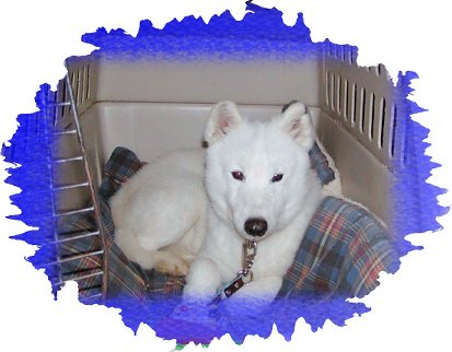 National Samoyed Rescue Homepage
